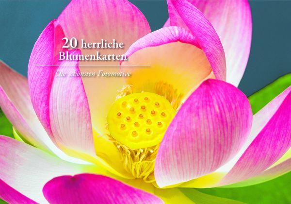 20 herrliche Blumen-Karten